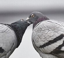 That Kiss - That Kiss - 2 Turtle Doves by lynn carter