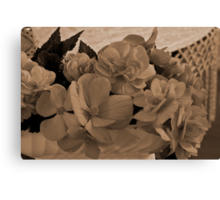Begonias Sepia Love Canvas Print