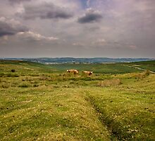 Dartmoor by PhotoLouis