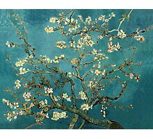 Blossoming Almond Tree Photographic Print