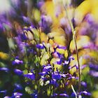 Lensbaby floral by Indea Vanmerllin