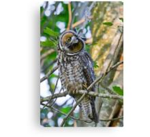 Curious Juvenile Long-eared Owl Canvas Print