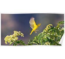 Yellow Warbler Leap Poster