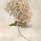 Hydrangea Softness by Sandra Foster