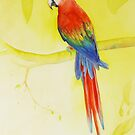 Scarlet Macaw by Ray Shuell