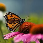 Monarch! by KatMagic Photography