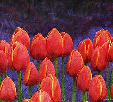 janes tulips by R Christopher  Vest
