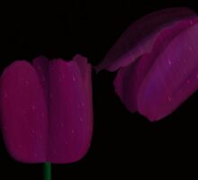 Red Violet Tulips in the Rain by emilybrownart