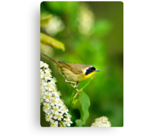Common Yellowthroat Warbler Canvas Print