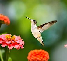 Sweet Promise Hummingbird by Christina Rollo
