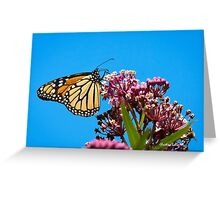 Meadow Monarch Butterfly Greeting Card