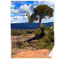 Pinion Pine at the Black Canyon Poster