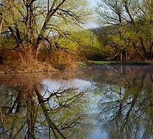 Tree Reflection Landscape by Christina Rollo