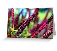 Going Going Gone To Seed Greeting Card