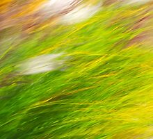 Fall Grass Abstract Motion Blur by Christina Rollo