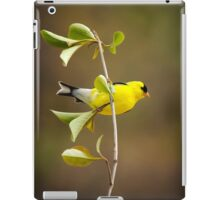American Goldfinch Painting iPad Case/Skin