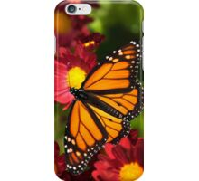 Orange Drift Monarch Butterfly iPhone Case/Skin