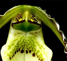 Captain Trips - Orchid Alien Discovery by ©Ashley Edmonds Cooke