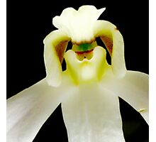 Chef - Orchid Alien Discovery Photographic Print
