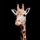 Giraffe head black by Jari Vipele