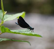Dragonfly by ChristyOliver