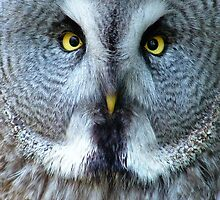 An Owl with very Beady Eyes! by MandyJervis