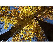 Autumn Shadows Geometry  Photographic Print
