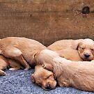 Puppy love by LadyFi