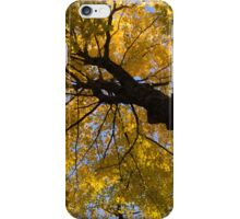 Under the Golden Maple Canopy iPhone Case/Skin