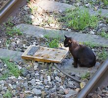cat on the rails by spetenfia