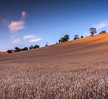 Harvest Meadow, Devon by David-J