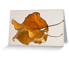 Seeing Double Autumn Leaf  Greeting Card