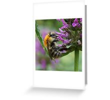 Common Carder Bumble Bee Greeting Card
