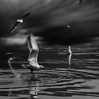 Gift Of The Seagull by Danica Radman