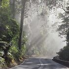 Sunlight through fog and trees by Paul Halley