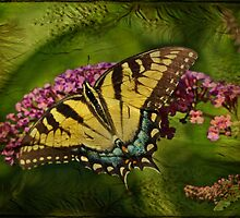 Eastern Tiger Swallowtail Butterfly - Papilio glaucus - Female by MotherNature2
