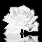 Rose in B&W by AnnDixon