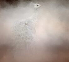 Purity - White Peacock - Wildlife by Jai Johnson
