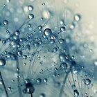 Dandy Blue Shower by Sharon Johnstone