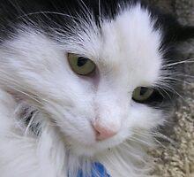 Close up of Black & White Cat by Margaret Miller