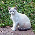 Kitten by Susan S. Kline