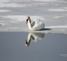 The Narcissistic Swan by Gilda Axelrod