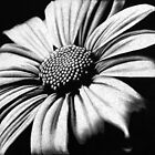 Spring has Sprung by Sheryl Unwin