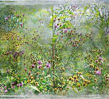 A Window of Dreams by Susan Werby
