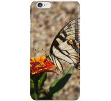 Eastern Tiger Swallowtail  iPhone Case/Skin