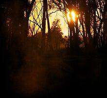 Foggy Goulburn Dawn by Thomas Stayner