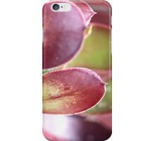 Purple Aeonium iPhone Case/Skin