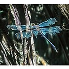 Blue dragonfly by Julia Harwood
