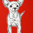 Chihuahua by Adam Regester