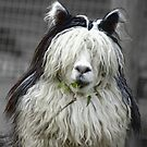 You can call me Al......paca by Yampimon